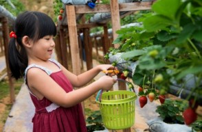 10 Tips to Help Kids Eat Healthier