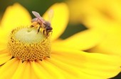 Do You Have an Enlarged Prostate? Try Flower Pollen