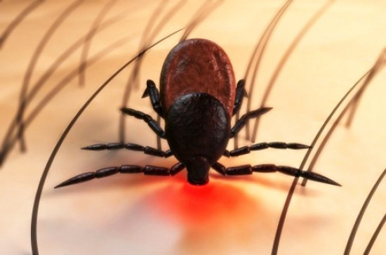 Lyme Disease Outbreak Is on the Rise