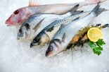 Does Your Fish Contain High Levels of Methylmercury?