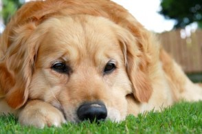 Preventing & Treating Disease in Your Pets