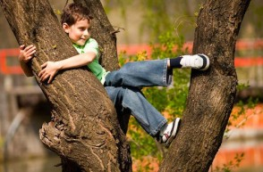 Risky Play for Children: Why Climbing Trees is Essential for Development