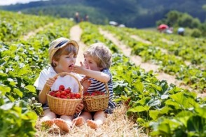 Farm Tales: Organically Grown vs. Chemically Cultivated
