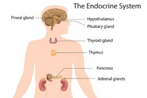 Endocrine Disruptors: The Hidden Threat to Your Health