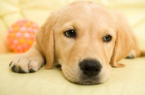Are Dog Toys Leaking Dangerous Chemicals?