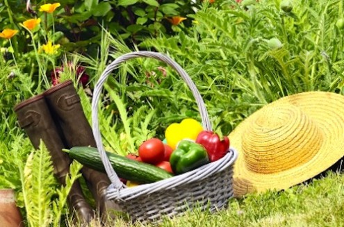 How to Make a Healthy Meal From Your Garden