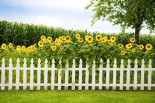 Beyond White Picket Fences: What It Means to Be Happy