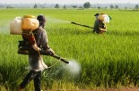 "Healthy Steps: GMO Companies Profit Under Guise of ""Feeding the World"""