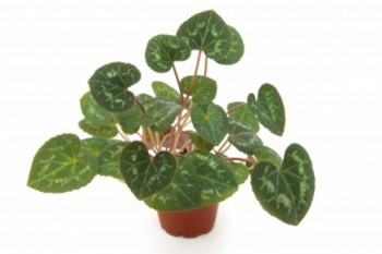 The Best Houseplants to Purify the Air