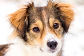 Freezing Temperatures: How to Keep Your Dog Warm