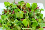 Boost Your Nutrients with Micro-Greens & Sprouts