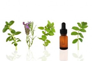 Nature's Secrets: Dr. Susanne's 5 All-Time Favorite Herbal Remedies