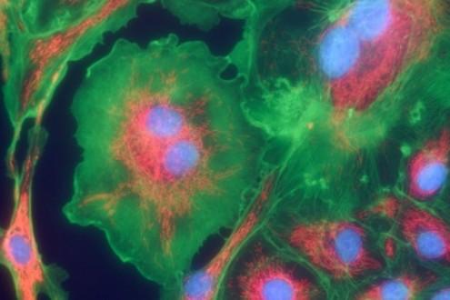 Healing Power of Mitochondria