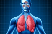 Breathe Easy: Everything You Need to Know about Lung Health