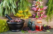 4 Powerful Herbs from Around the World