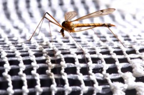 Solving Malaria Around the World