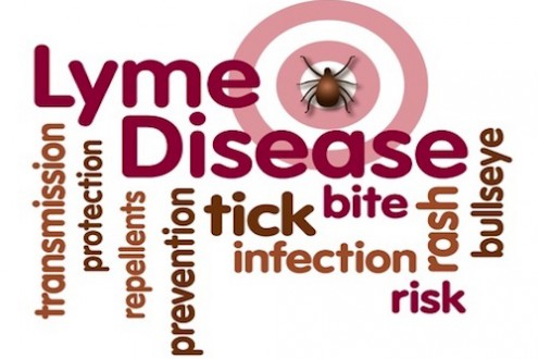 How Lyme Disease Can Disrupt Your Life