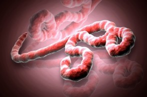 Ebola Virus: Is the U.S. Next to Be Affected?