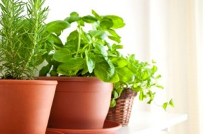 10 Best Medicinal Herbs to Grow at Home