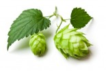 Hops & Lignan: Lesser-Known Solutions for Menopausal Symptoms