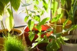 Indoor Plants that Clean Your Air