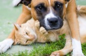 Your Pets & the Ebola Risk