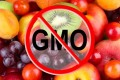 Labeling, Safety & the Future of GMOs