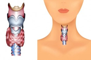 10 Things You Need to Know About Your Thyroid