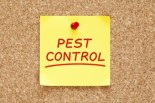 Non-Toxic Pest Control for Your Home