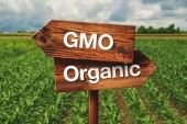 GMO Labeling: Public Rights vs. Government Desires