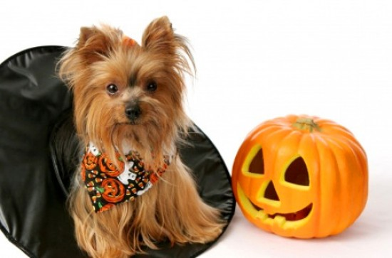 Trick or Trouble: Life-Saving Advice for Your Pets this Halloween