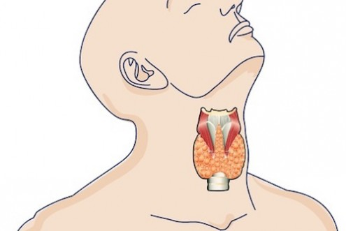 The Ins & Outs of Restoring Thyroid Function