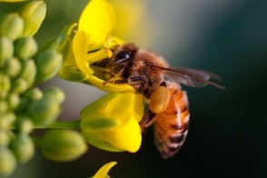 Pollinators & Pesticides: Impact on Future Food Supply