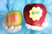 USDA Approves of GMO Potatoes & Apples