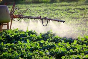 Dangers of RoundUp PLUS Natural Weed Control Alternatives