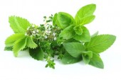 Top 3 Herbs for Women's Health