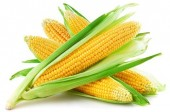 Food in the News: High Fructose Corn Syrup